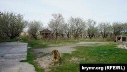 Миндалевый сад под охраной собаки