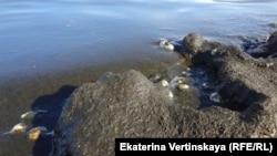 Берег Байкала сегодня