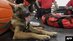 یکی از سگهای گروه کیناین که در سال ۲۰۱۰ به منطقه زلزلهزده هائیتی اعزام شدهبود.