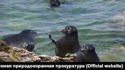 Лежбище нерп на мысе Лаканда на Байкале