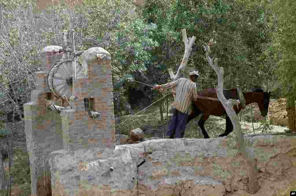 Село Банд Е-Амир недалеко от Персеполиса. Июль 1071 года. В это время в село уже протянули электричество. Однако воду всё еще добывали из колодца с помощью механической силы. (AP Photo/Horst Faas)