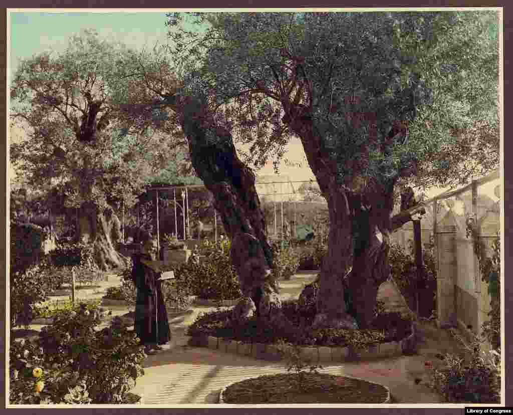 A monk in the Garden of Gethsemane, Jerusalem