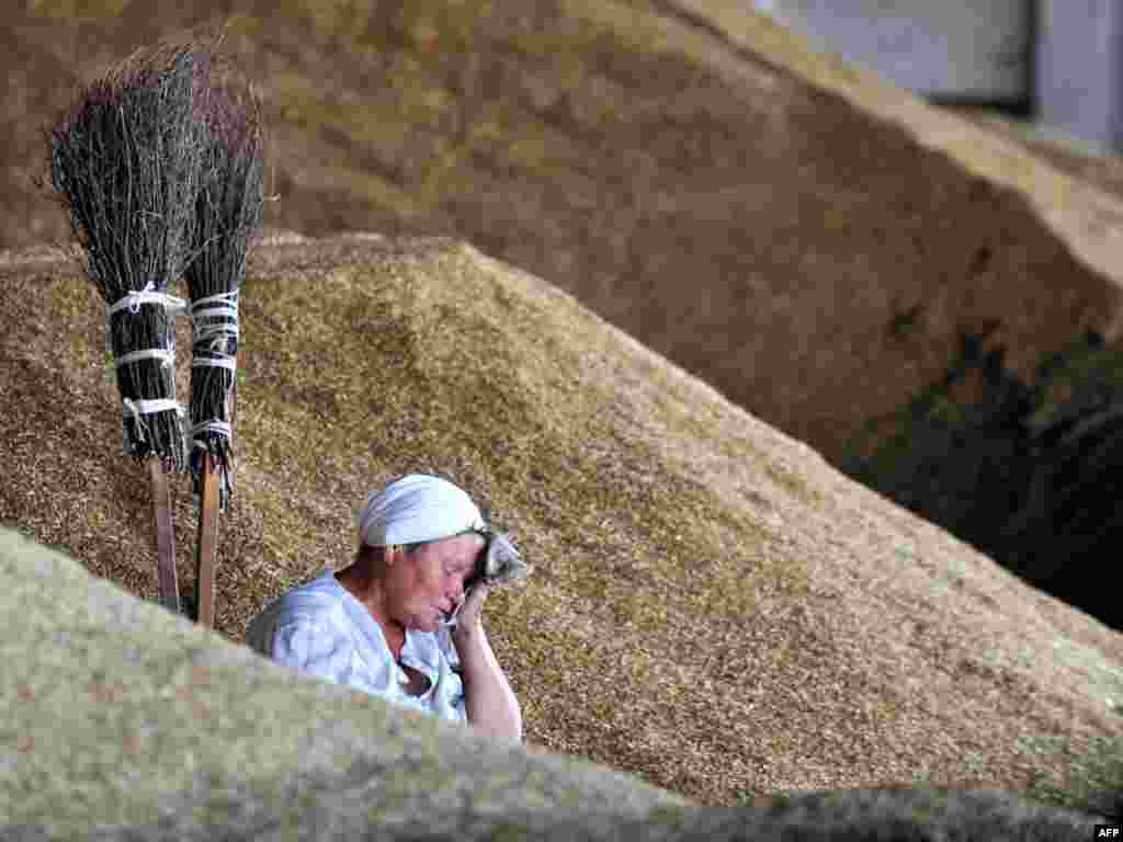 A woman rests after harvesting wheat in Yurievo, some 75 kilometers north from Minsk. Photo by Viktor Drachev for AFP