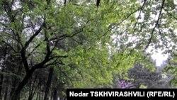 То, что Энукидзе считает амнистией, защитники природы называют индульгенцией