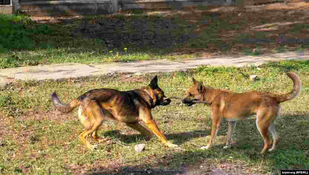 А это псы-дворняги в селе Калинино, которое находится на северо-востоке степного Красногвардейского района. Чем оно живет сегодня – в фотогалерееКрым.Реалии