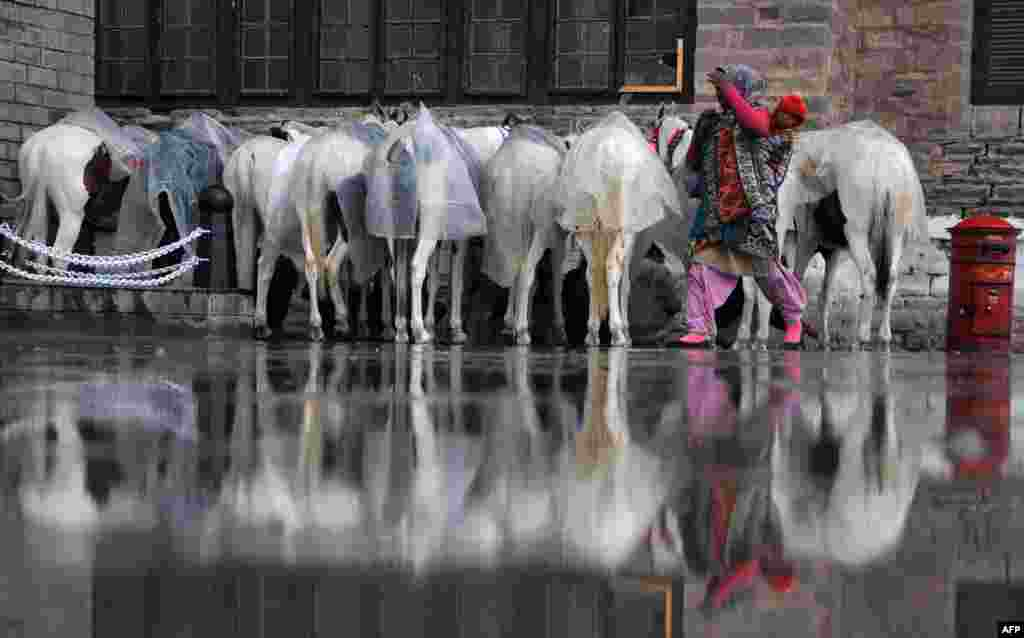 An Indian pedestrian carries a child as she walks past horses reflected in a puddle of water following heavy rains in the northern hill station of Shimla on February 28. (AFP)