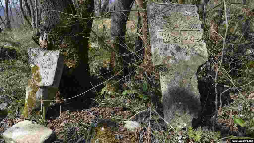 Eski qırımtatar mezarlığınıñ yerinde orman östi