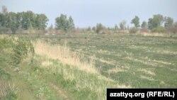 Қанат Аяпбергенов жыртқан жер. Павлодар облысы, 20 мамыр 2016 жыл.