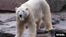 Медведь Кнут, 2007