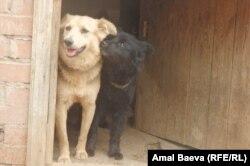 Спасённые от забоя собаки
