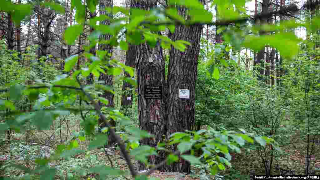 Моторошний Биківнянський ліс