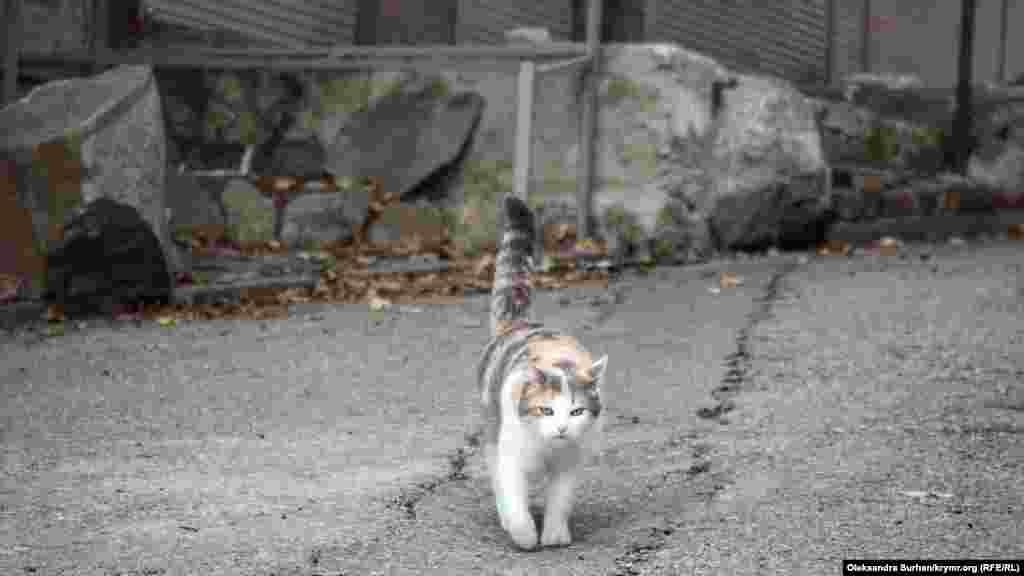 Единственные посетители в декабре разве что – коты