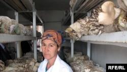 Безопасные грибы выращиваются только в искусственных условиях