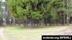 Магіла на ўскрайку Пячэрскага лесапарку