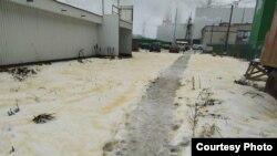Желтый снег в Сегеже