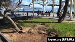 Спиленные деревья на набережной Ялты