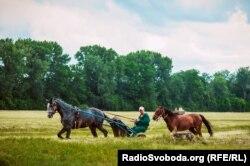 Кінь рисистої породи тренується на майданчику із наїзником перед випробуваннями на іподромі