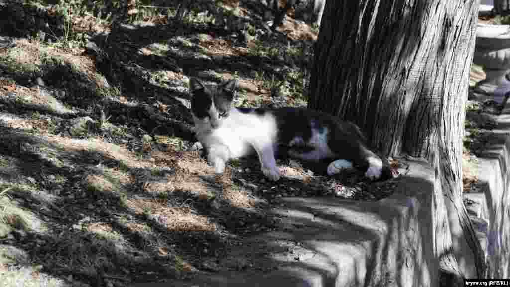 Местный «хозяин» парка – симеизский кот – пристально наблюдают за ходом работ