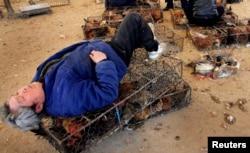 Продавец на «мокром рынке» в китайском городе Нанкин спит на клетке с птицами. Рядом – утки на продажу.