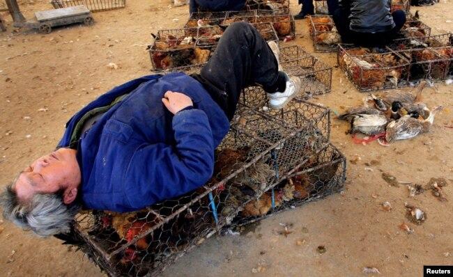 """Продавец на """"мокром рынке"""" в китайском городе Нанкин спит на клетке с птицами. Рядом – утки на продажу"""