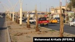 شتلات فسائل النخيل في شوارع الموصل