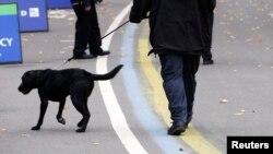 Нью-Йоркда полиция ўргатилган ит билан (иллюстратив сурат)