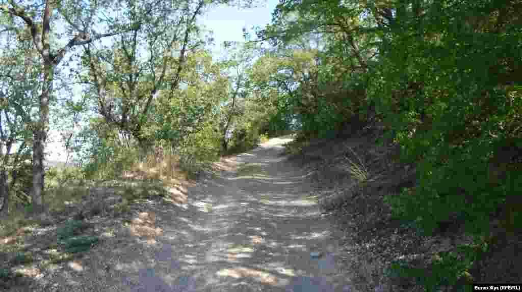 Дорога уходит в лес