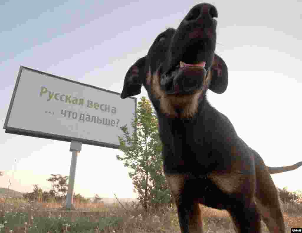 У Севастополі з'явилися білборди «Російська весна ... що далі?», 7 липня 2014 року