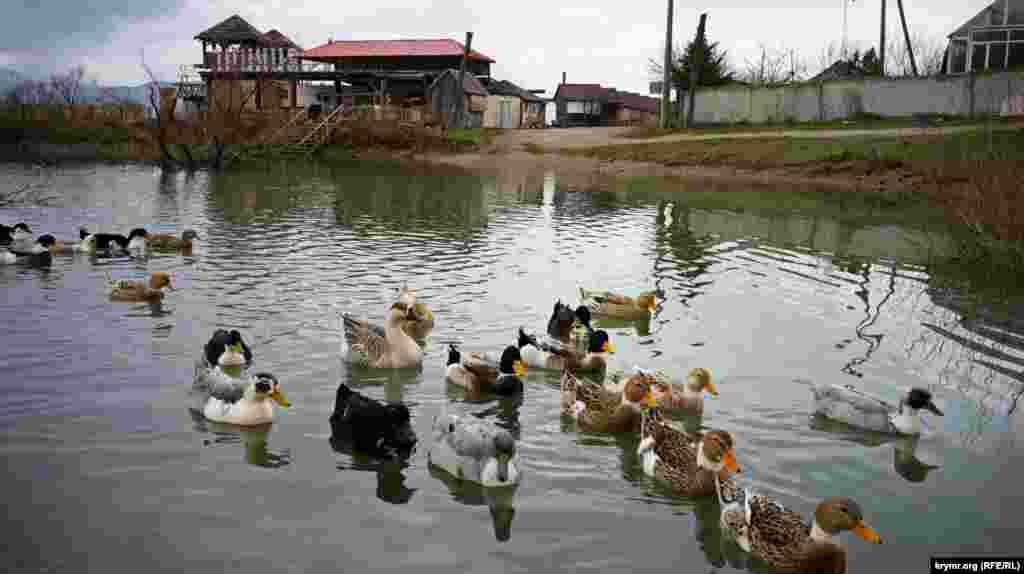 Птахи, що живуть на штучній водоймі, розраховують на годування