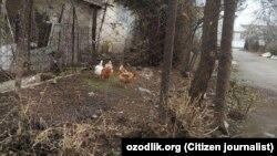Под Ташкентом люди разводят кур во дворе многоэтажки.