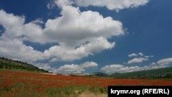 Маковое поле в Бахчисарайском районе, Крым