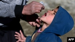 Afghanistan -- An Afghan health worker administers polio vaccine drops to a child on the last day of a vaccination campaign in Kabul, February 11, 2014