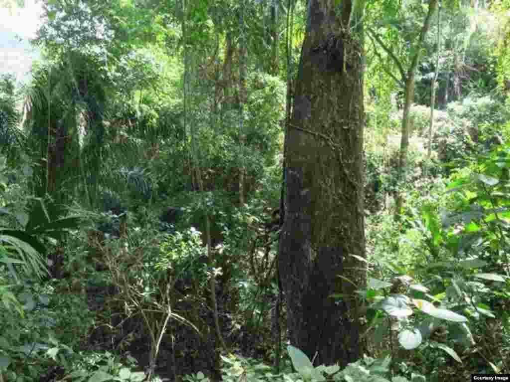 Джунгли Венесуэлы, Южная Америка