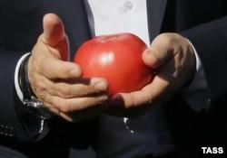 Органический помидор в руках Владимира Путина