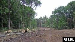 Масове вирубування дерев у Харкові змушує людей об'єднуватися в політичну силу