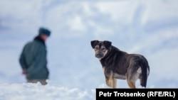 Карабек, собака лесника Болата Байгазиева. Алматинская область, 2 марта 2019 года.