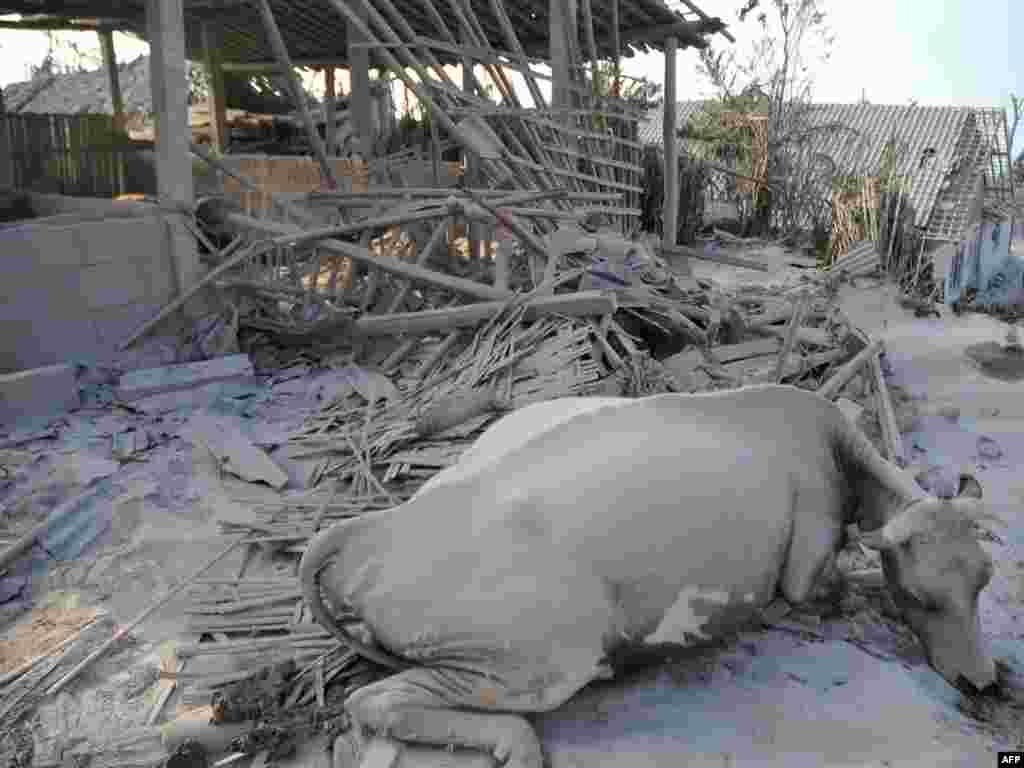 Lokalne vlasti evakuirale su 11.000 stanovnika koji žive na obroncima vulkana, gdje su mnoge kuće srušene i prekrivene pepelom, 27.10. 2010. Foto: AFP / Clara Prima