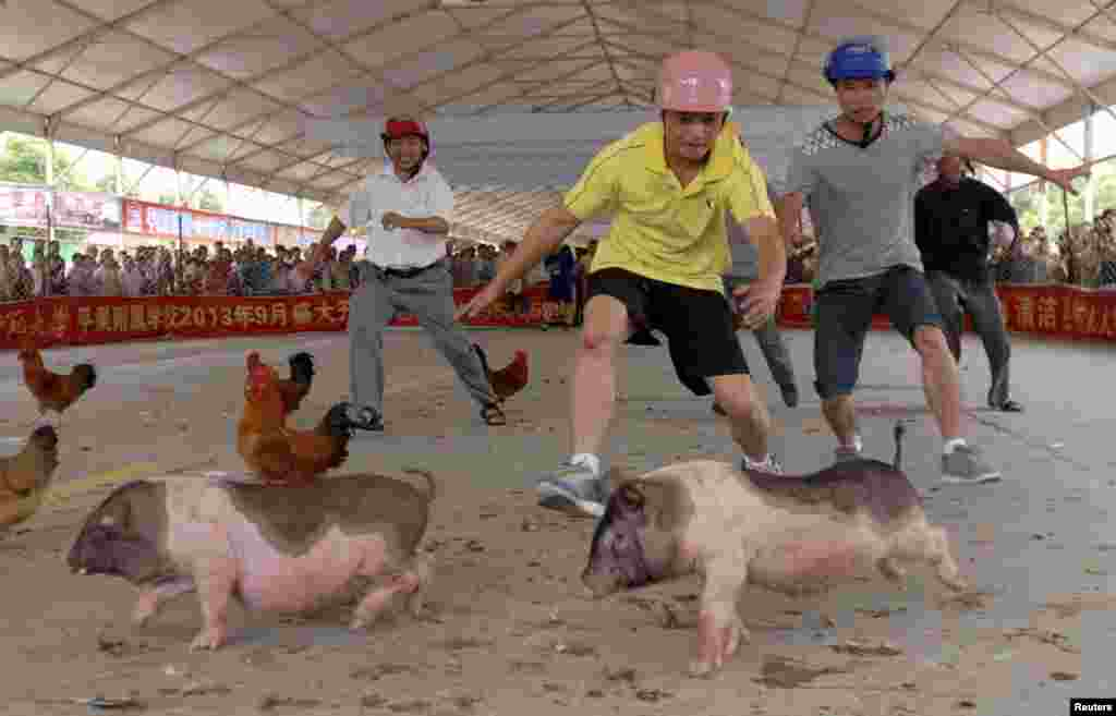 People try to catch pigs and chickens during an event ahead of the Dragon Boat Festival at a tourism fair in China's Guangxi Zhuang Autonomous Region. (Reuters)