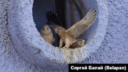Фота: Сяргей Балай, БелаПАН