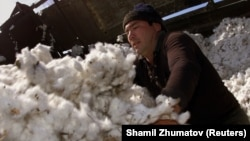 Cotton makes up one-quarter of Uzbekistan's GDP. (file photo)