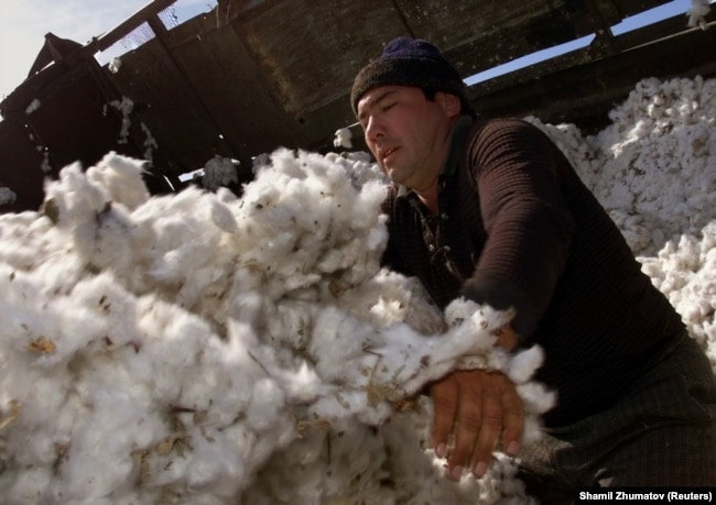 Uzbekistan's cotton industry generates hundreds of millions of dollars in annual revenue. (file photo)