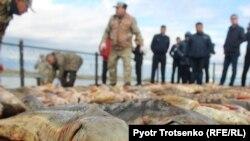 Изъятие незаконно выловленной в реке Урал рыбы. Иллюстративное фото.