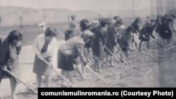 """Munca patriotică era muncă forțată și mare parte din """"realizările"""" comuniste au fost făcute cu sclavi, mai ales tineri. Aici, studenți lucrând la reparatul drumurilor în 1983. Sursa: comunismulinromania.ro (MNIR)"""
