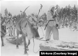 Finlandezii au folosit reni pentru a deplasa prin păduri mitraliere și lansatoare de mortiere în liniște aproape absolută