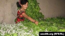 Девушка, занимающаяся выращиванием шелковичных червей.