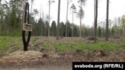 На гэтым месцы расьце лес Васіля Быкава
