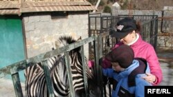 The zoo in Yalta is run by a prominent politician.