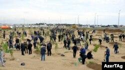 Prokurorlar 2 hektar ərazidə 1500-dən çox Eldar şamı əkiblər.