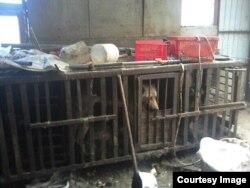Собаки в клетках в доме Толика