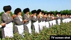 Туркменские старейшины благословляют сбор хлопка (архивное фото)
